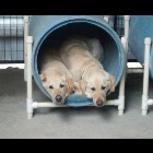 Here you can see a couple of young dogs staying at the kennel for a few days. This is where your board and train dog would stay.