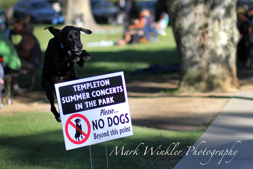 Dog Training Templeton Ca